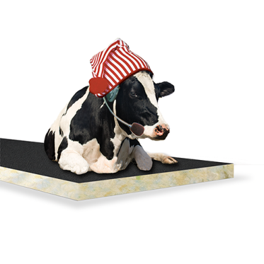 Contact North Brook Cow Mattress and Cow Beds