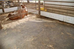 Fresh cow on the Calving Pen System from North Brook Farms